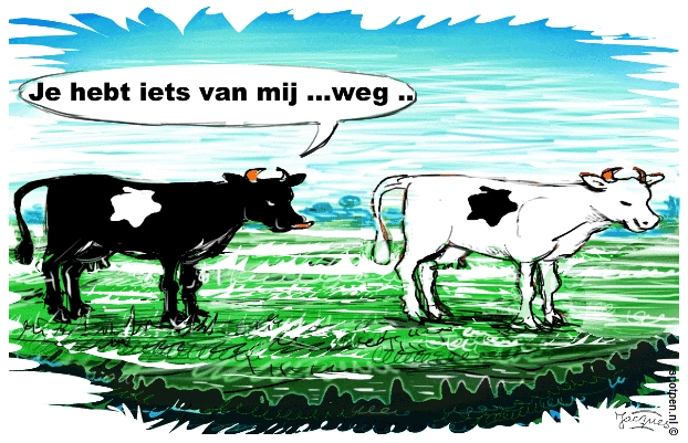 cartoon koe koeien runderen vee