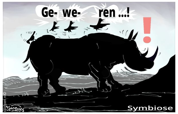 neushoorn cartoon neushoorns