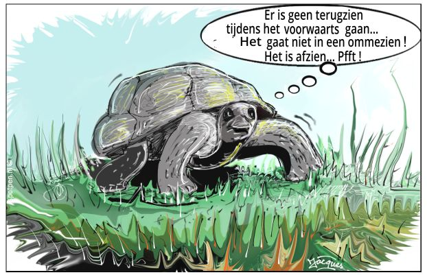 schildpad cartoon